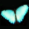icon017.jpg