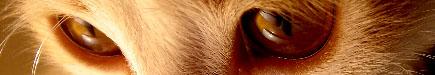 kitty3523.jpg